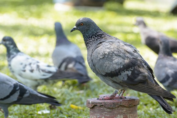 bird control pleasanton